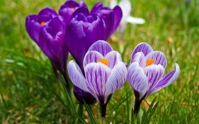 Zielony Dzień Wiosny