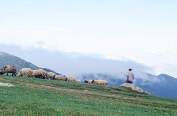 Teatr Eden Odważny Pastuszek